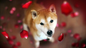 Read more about the article Dogecoin Rival Shiba Inu Spikes in Value While DOGE Prices Flounder, SHIB Jumps 21% in 24 Hours